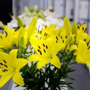 فروش گل و گیاه 22708974-09121507825